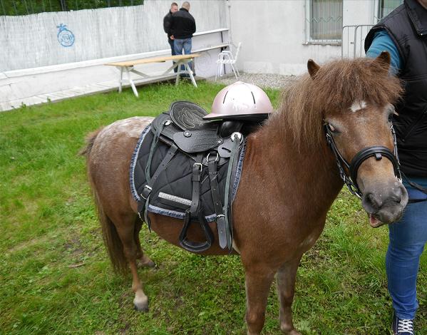 kucyki Pony wynajem warszawa kreatorzyimprez