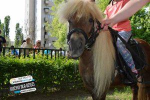 konie_dla_dzieci