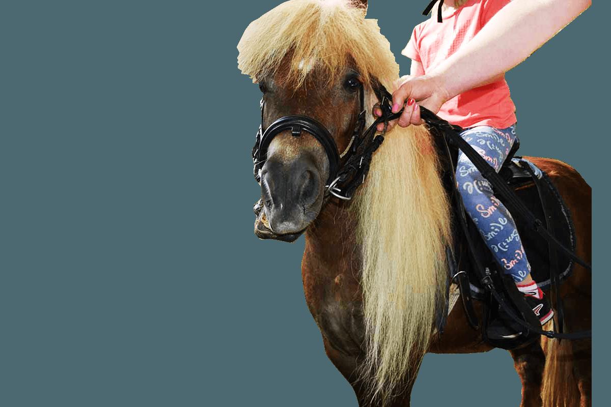 Kucyk Pony Warszawa