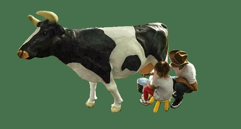 Wynajem krowy do dojenia