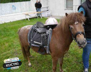 kucyki-pony-warszawy