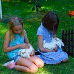 mini królik małe