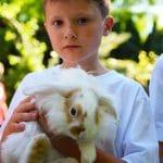 królik_